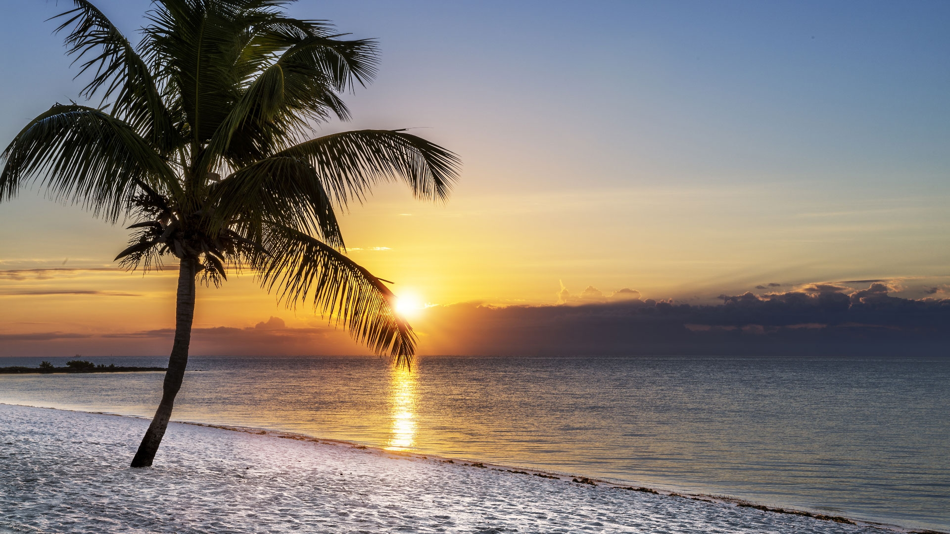 An Isla Bella Palm Tree on the Beach at Sunset