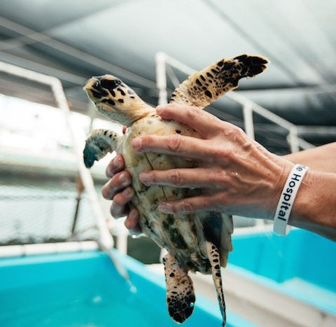 hands holding a sea turtle